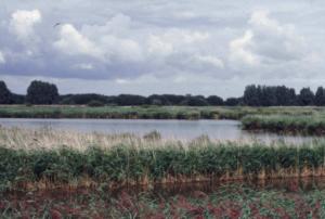 Zwaansbroek west fase IV